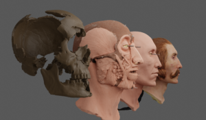 Render of the 3D scan of the original bone fragments and 3D models of the facial reconstruction by Maja d'Hollosy.